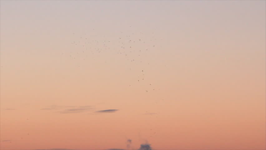 Birds circling at pale pink sky in dawn | Shutterstock HD Video #11090570