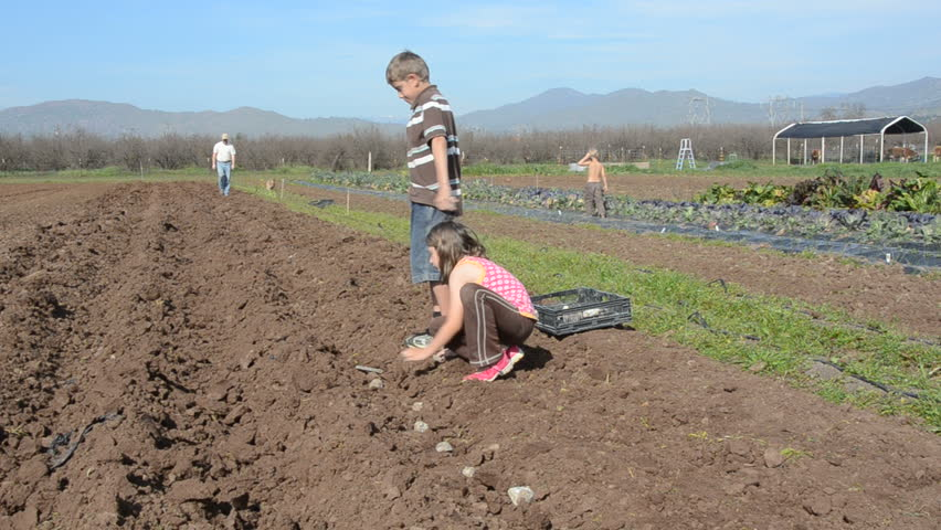 boy and girl work together to plant a row of potatoes on the farm