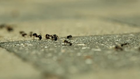 Ants running along the ground, concept of teamwork
