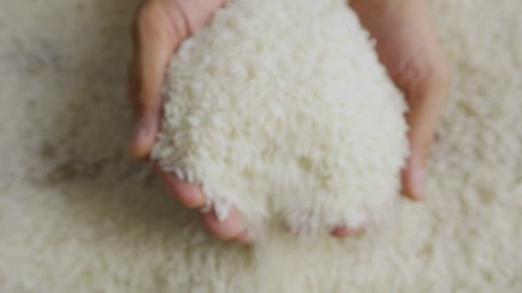 Rice grains in the hands. Man hands holding rice grain. Close-up 4k footage.