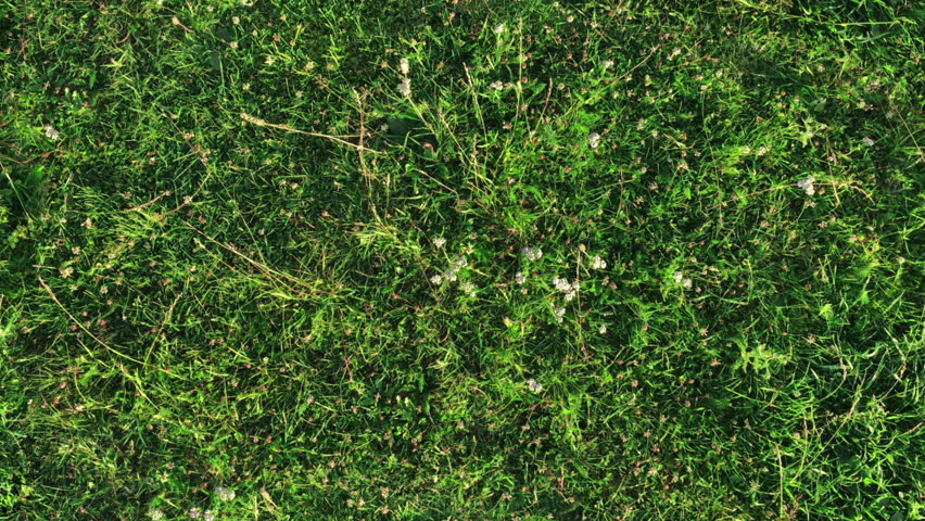 Fresh green grass shot from top view, with wind flowing and long shadows casting. perfect for digital composition. seamless tiled texture of grass. camera is located above th field and it is static.