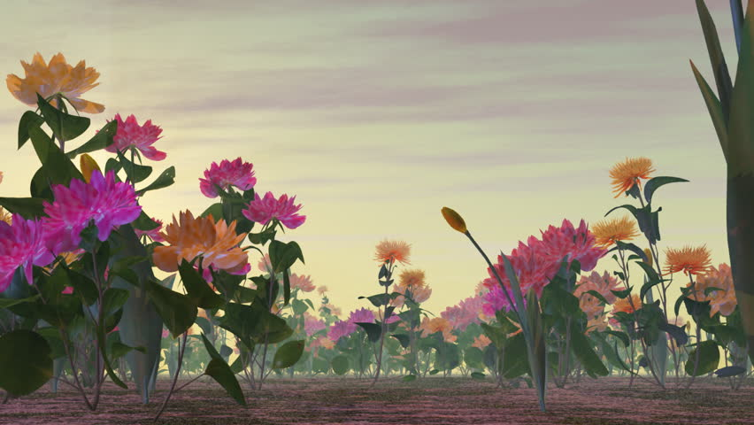 walking in flower garden, time lapse