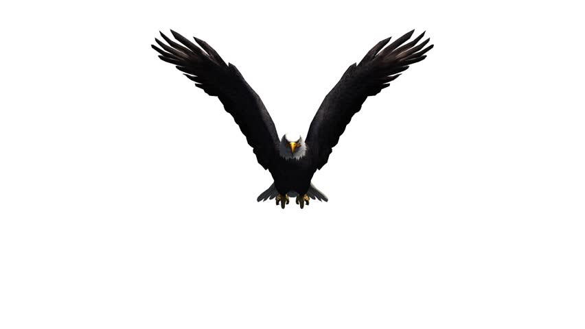 Animated eagle flying