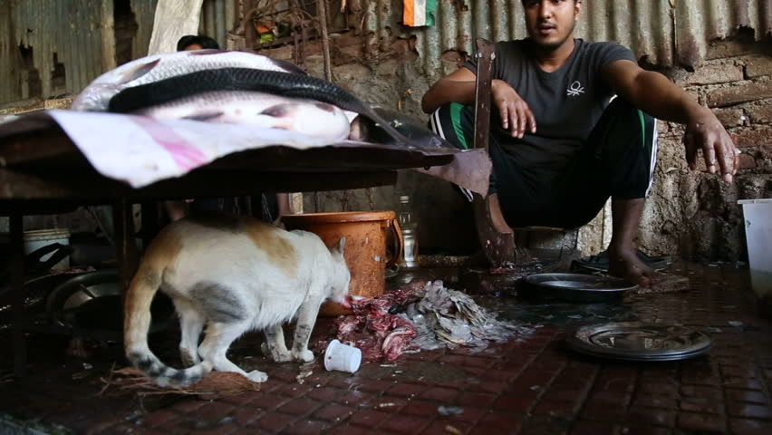 MUMBAI, INDIA - 11 JANUARY 2015: Cat eating fish leftovers under a stand of market in Mumbai. | Shutterstock HD Video #11476400