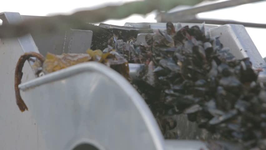Shetland, Scotland, June 2015: Fishing boat harvesting mussels off the coast of Shetland
