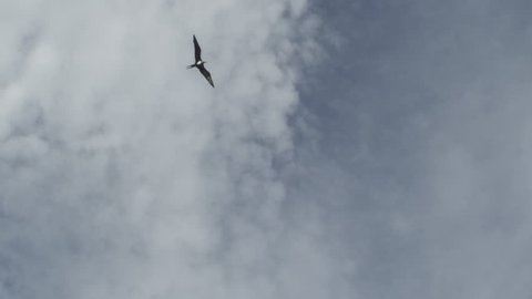 Bird flying in sky, Indonesia, 2012