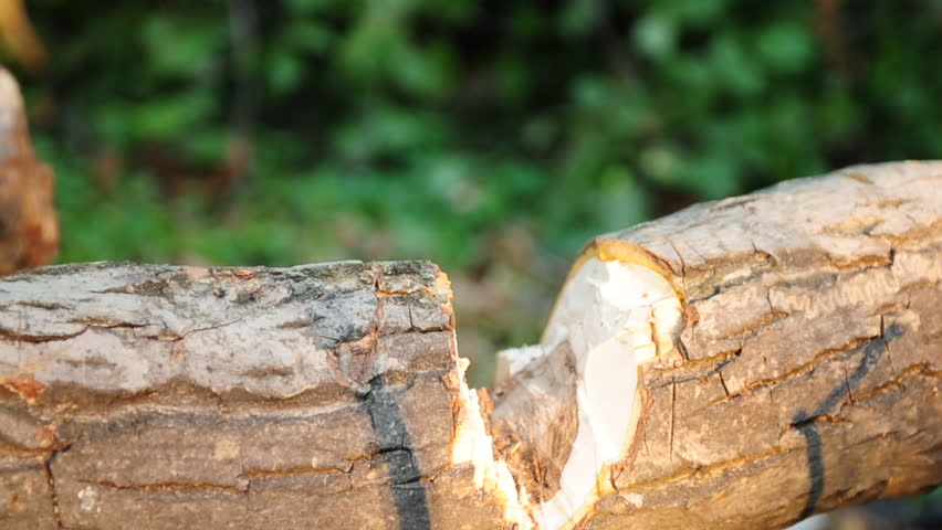 Lumberjack Chopping Wood With Axe Stock Footage Video 100