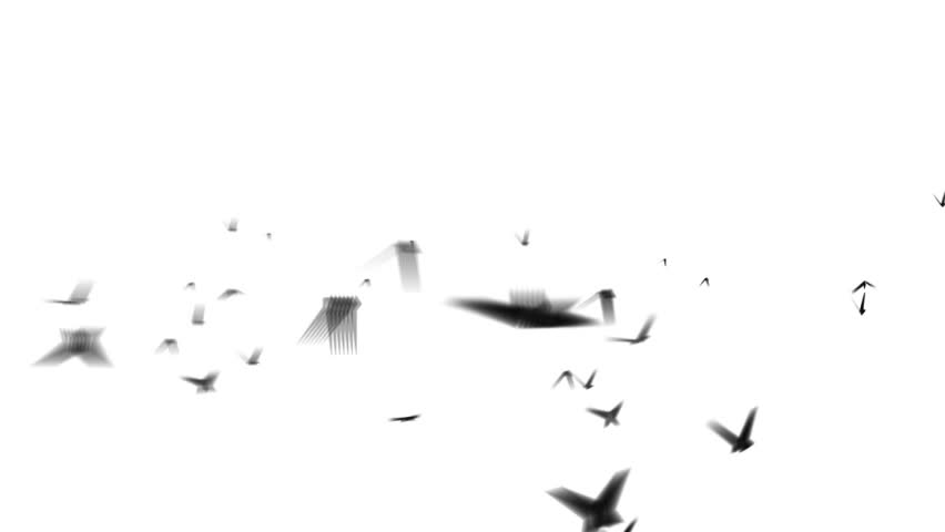 "flock of birds isolated on white ( Series 1 - Version from 1 to 3 ) "" Thing Different "" ++ "" You can find every week new Footage "" + + + "" Have a look at the other Footage series """