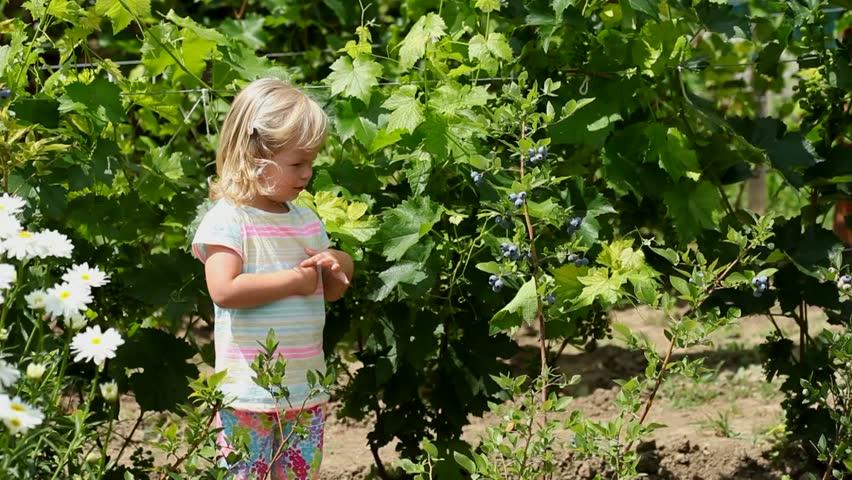 Lovely Girl Picking Fresh Blueberries In The Garden   HD Stock Video Clip