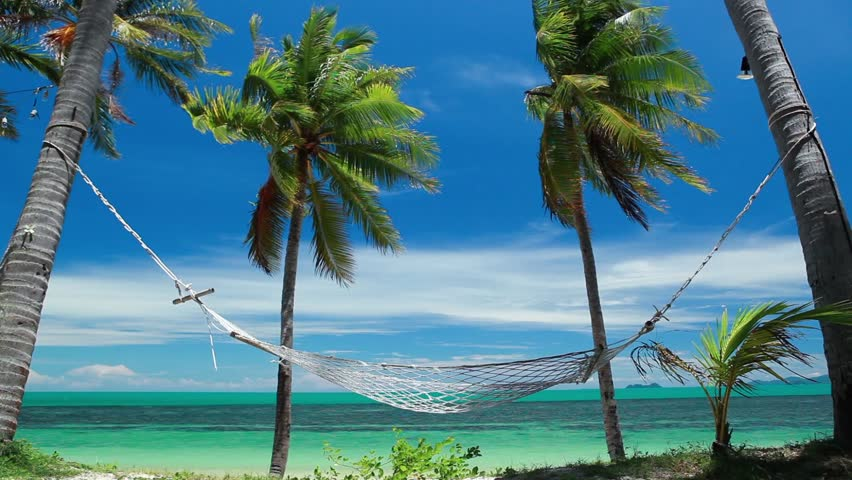 Two Palms On Beautiful Tropical Beach Stock Footage Video