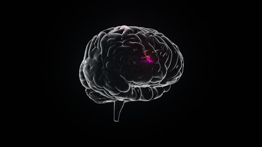 Human brain with neuronal impulses. Spinning. Loopable. Blue. Black and white. Science. More options in my portfolio. | Shutterstock HD Video #11740580
