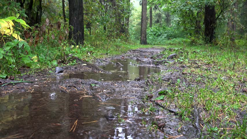 Heavy rain in a puddle on a forest path.