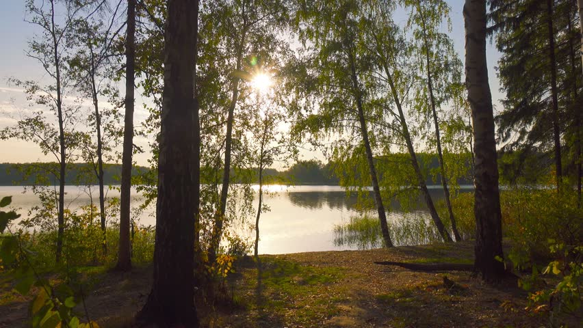 Autumn nature  landscape, POV, walking out on forest lake shore, steadicam.