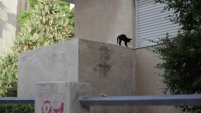 Black street cat walks across window sill