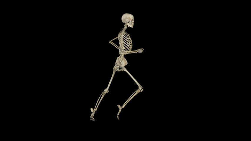 running skeleton stock footage video | shutterstock, Skeleton