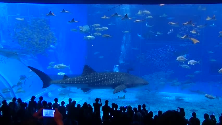 World's biggest aquarium window in Okinawa, Japan. 7 September 2015 | Shutterstock HD Video #12184160