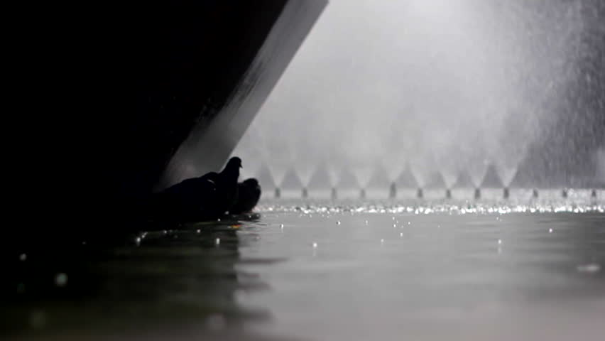 Several pigeons drink water in fountain, silhouette, slow motion. #12187700