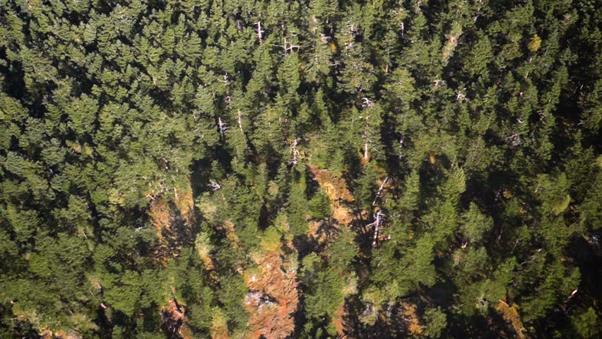 Flying over thick forest of Evergreen trees on sunny day | Shutterstock HD Video #12285350