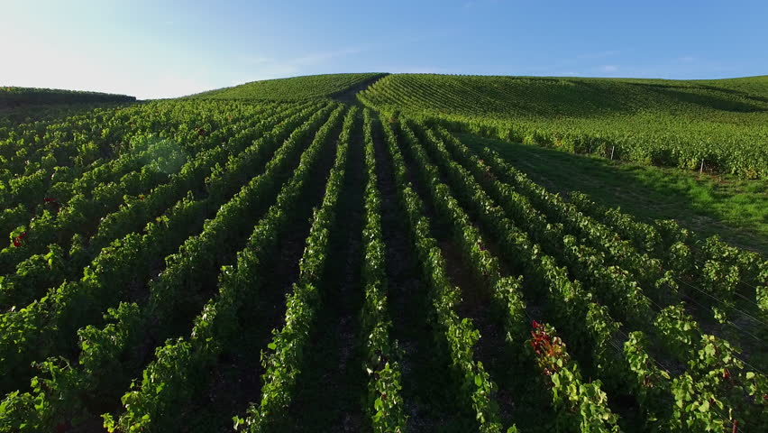 Champagne vineyards in the Cote des Bar area of the Aube department near to Les Riceys, Champagne-Ardennes, France, Europe, 4K (3840X2160, 25 fps)