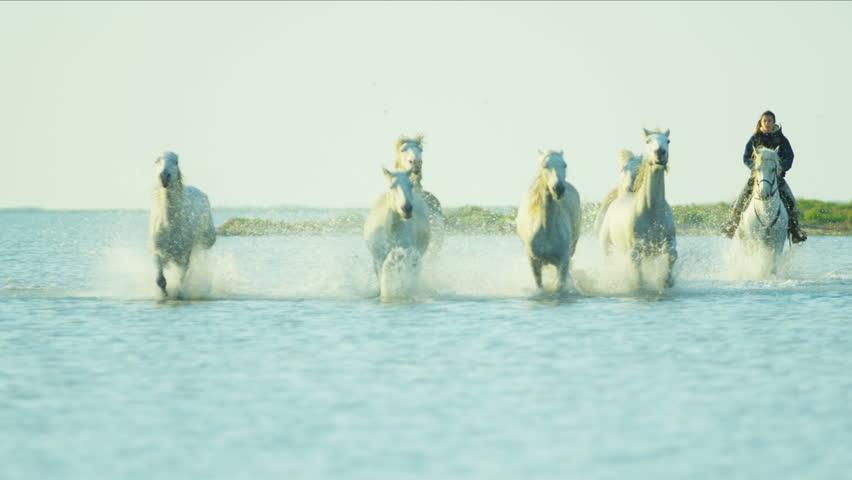 Camargue, France animal horse wild white livestock environment rider cowboy running water Mediterranean nature tourism travel RED DRAGON #12328460