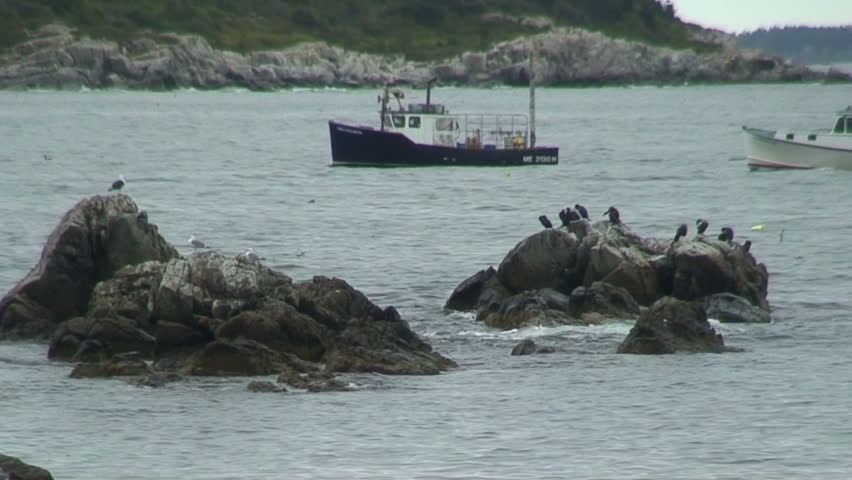 Two Maine fishing boats passing dropping baskets, along rocky shore with cormorants and sea gulls  on rocks and flying.