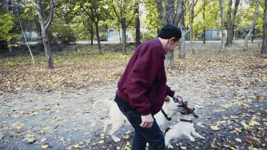 Young man playing with two dogs in autumn park slow motion   Shutterstock HD Video #12643070