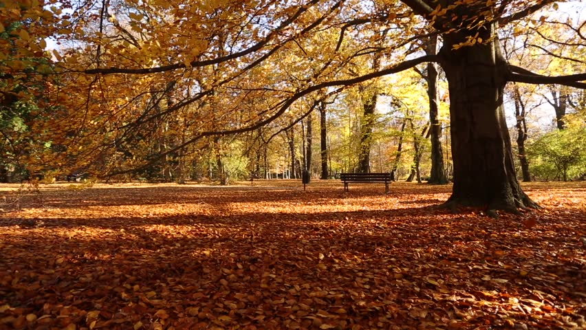 Other: Landscapes Beautiful Trail Color Scenery Autumn Park Fall ...