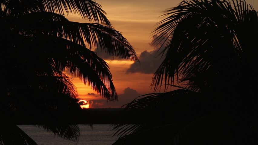 Sunset through palm tree leaf silhouette    Shutterstock HD Video #12685820