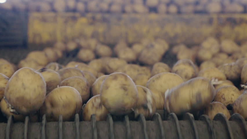 Potato sorting, processing and packing factory | Shutterstock HD Video #12770450