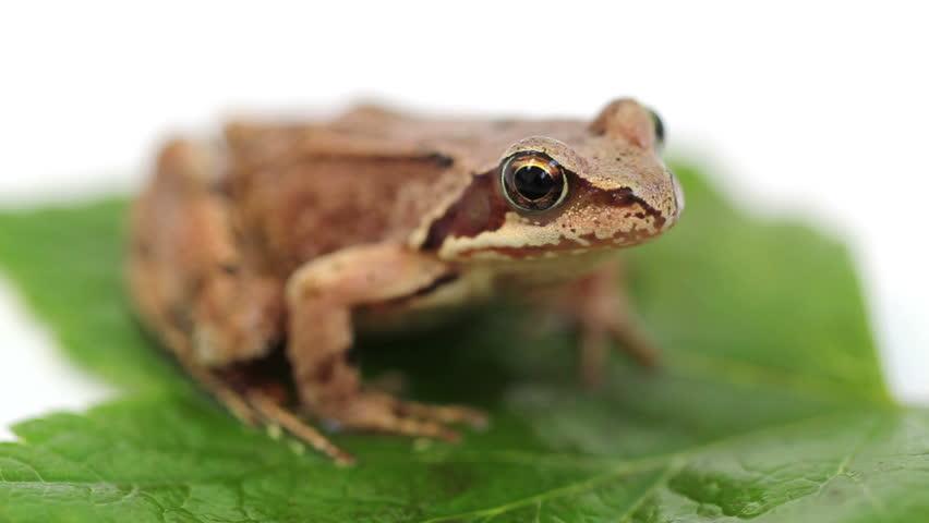 frog on green leaf - 4 shots