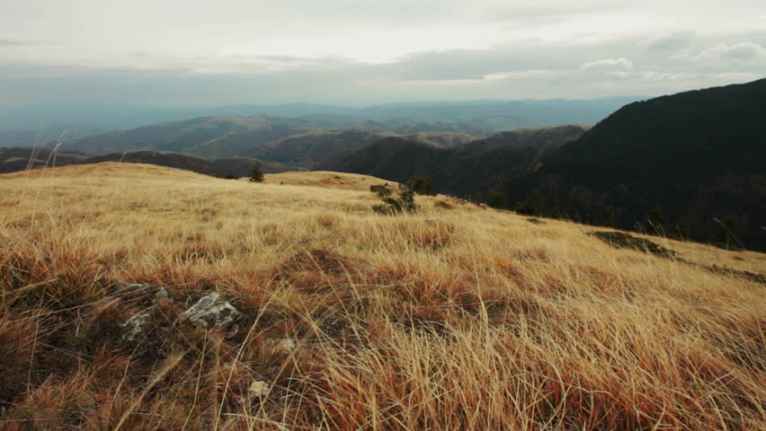 dry grass field background. Dry Mountain Grass Waving At Strong Wind In High Mountains Cloudy Windy Day; No Field Background O