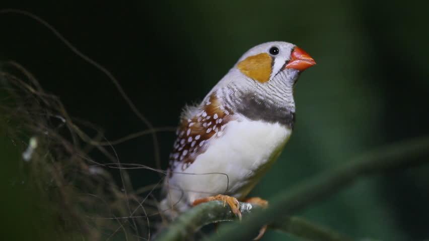 Birds Finch 1