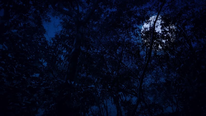 Gliding Under Jungle At Night With Full Moon