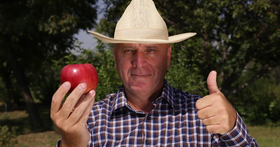 Thumbs Up Good Harvest Orchard Farmer Examine Red Apple Fruit Camera Present