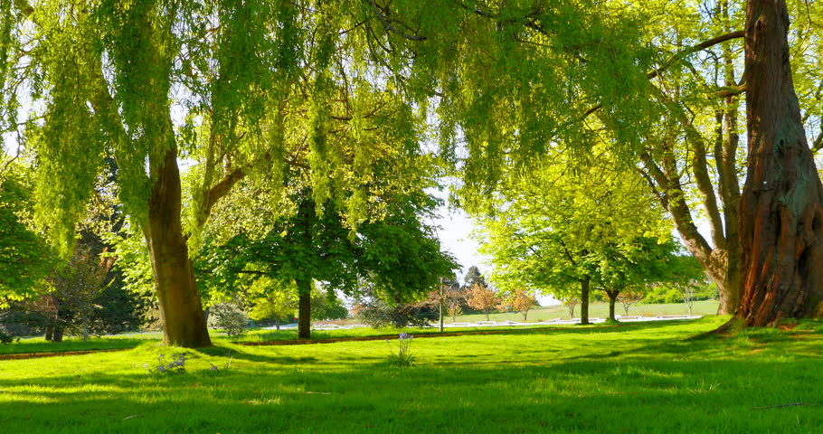 4K Willow Trees in Green City Park, Warm Spring Summer Day, Beacon Hill Park