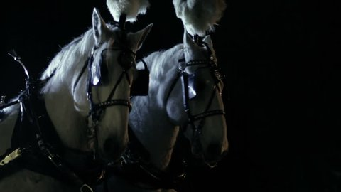 Two royal white horses harnessed to a carriage at night.