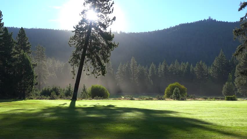 CIRCA 2015 - Morning fog shrouds a beautiful pine tree at sunrise.   Shutterstock HD Video #13596260