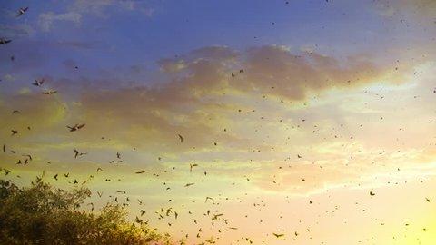 Huge Flock of Birds Flying at Sunset in Slow Motion
