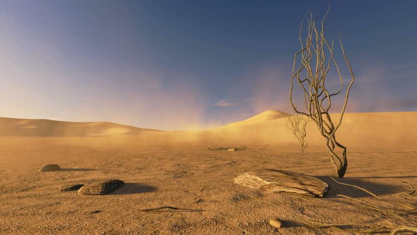 Dry Tree In The Desert Dunes Image Free Stock Photo