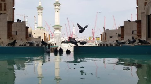 Pigeons resting and drinking pool water with Masjid Haram minarets background