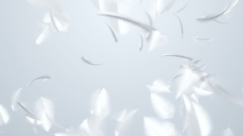 Animation flying of white feathers in slow motion. Animation of seamless loop.