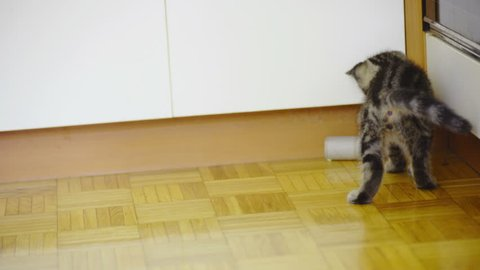 Baby cat pushing paper sleeve around home 4K. Playful cute baby kitten playing with empty toiled sleeve on floor jumping around.