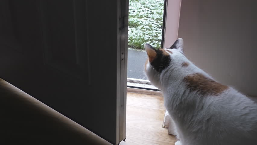Cat asks to go out and waits by the door to be opened.When sees the snow on green grass does not rush, but eventually decides to give a try and runs outside | Shutterstock HD Video #13966910