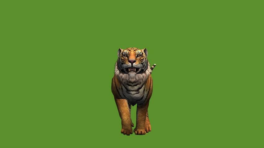 Tiger jumped to attack prey,wildlife animals habitat. cg_02013