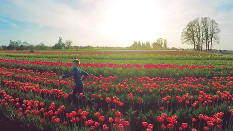 Slow motion side view portrait of young boy running through a field of tulips, aerial view