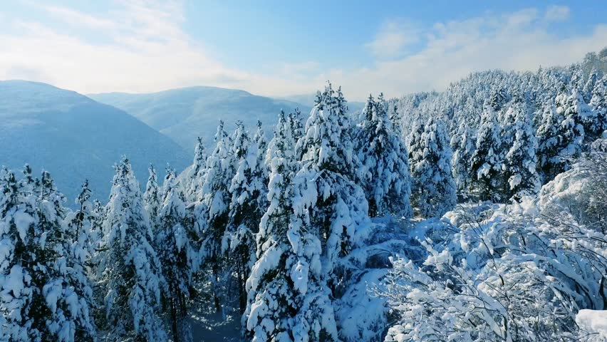 Drone Footage Snow Covered Trees Nature Beautiful Winter Europe Aerial Forest Mountain Season Travel White Frozen Famous Idyllic Tourism