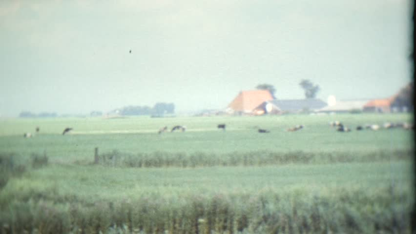 CIRCA 1968: Vintage 8mm film of a Dutch landscape in the meadow