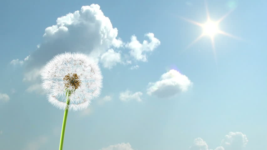 Dandelion, 3d animation on time-lapsed sky background