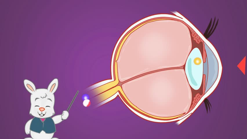 Eye Anatomy Study Vector Animation Stock Footage Video 100 Royalty