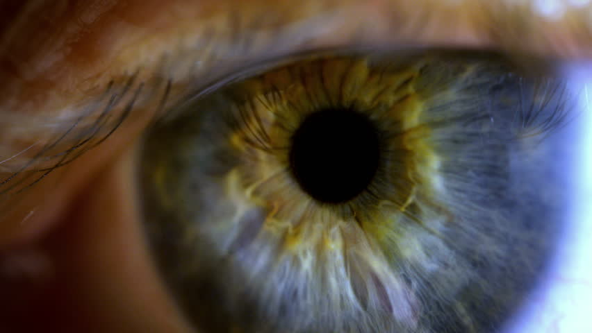 Human eye iris contracting. Extreme close up. #14732140